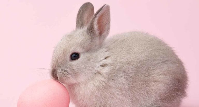 Names you can Call your Female Rabbit Bunny