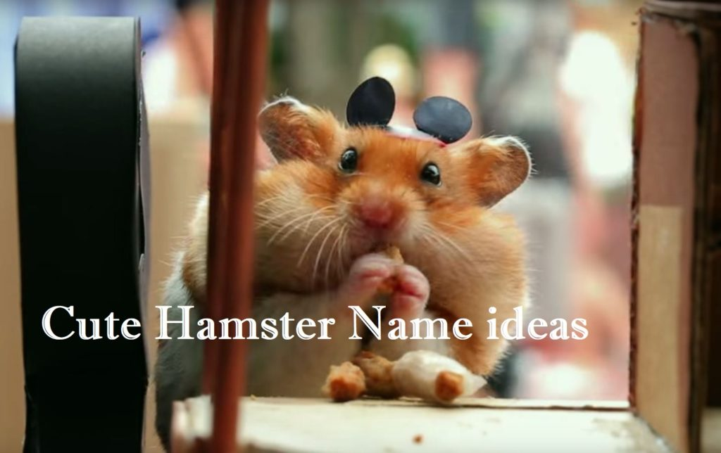 51  Cute Hamster Names For Male  Female Hamsters-9668